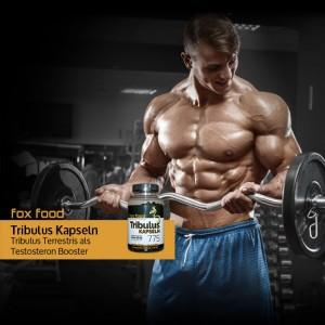 Tribulus Kapseln für Ihre Sporternährung - Fox Food Supplement